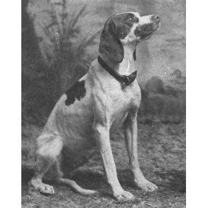 Antikvariske bøger om jagthunde og andre hunde