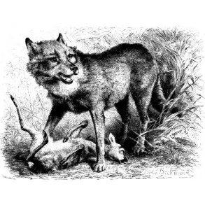Alt om ulve og ulvejagt
