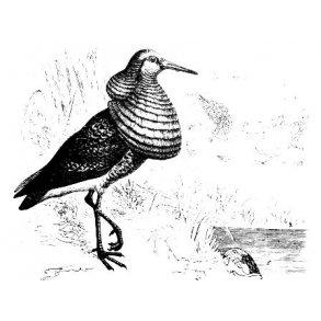 Nye fugle- og naturbøger