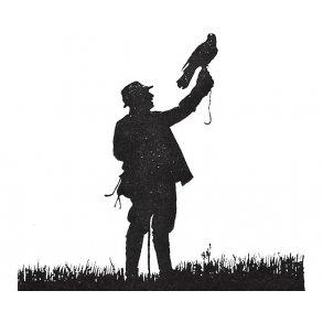 Alt om rovfugle og falkejagt