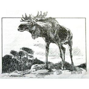 Alt om elge og elgjakt