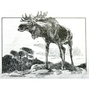 Jagt og vildt, Skandinavien