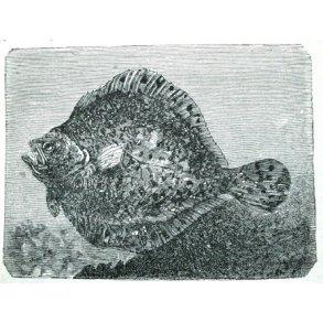 Antikvariske lystfiskerbøger