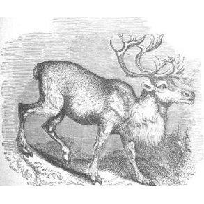 Nye norske jagtbøger