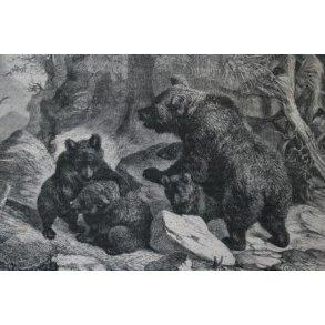 Alt om bjørnejagt