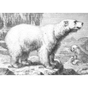 Jagt og vildt, Grønland