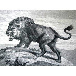 Jagt og vildt, Afrika