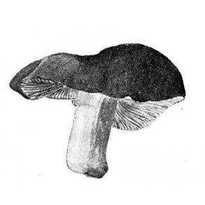 SVAMPE - med hat & stok