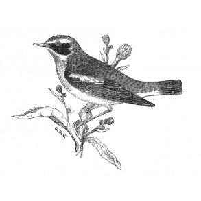 Fuglebøger