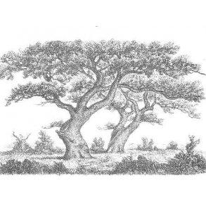 SKOV - Skove og skovbrug