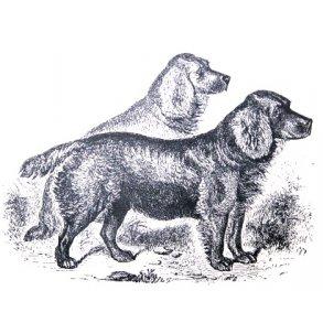 Hundetræningsfilm