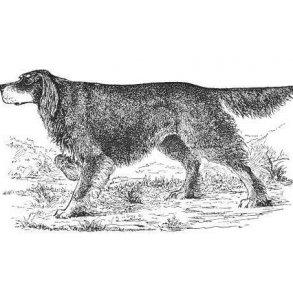 Alt om jagt med stående hund