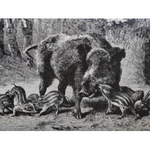 Jagt og vildt, øvrige udland